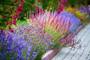 Flower Bulb Catalogs Landscaper Cleveland